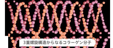 ビタブリッドCスキンコラーゲン構造.png